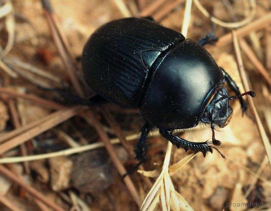 Значение талисмана жук скарабей