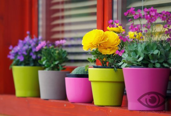 cvety-v-gorshkah-na-den-rozhdenija