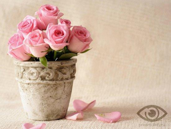 cvety-v-gorshke-na-den-rozhdenija
