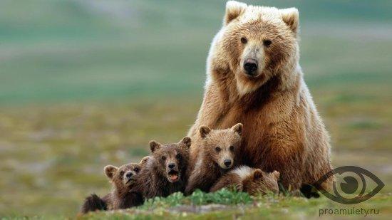 medvedica-medvezhata