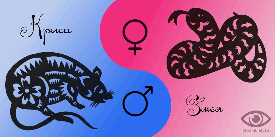 Крыса и змея совместимость секс