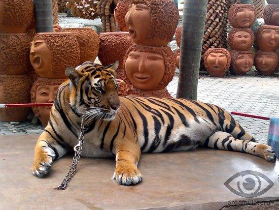 Секс с женщиной тигром