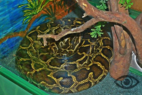 Секс змея кабан