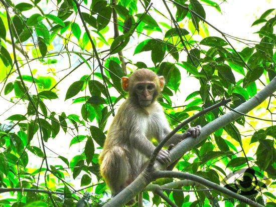 Сексуальная совместимость обезьяны и крысы