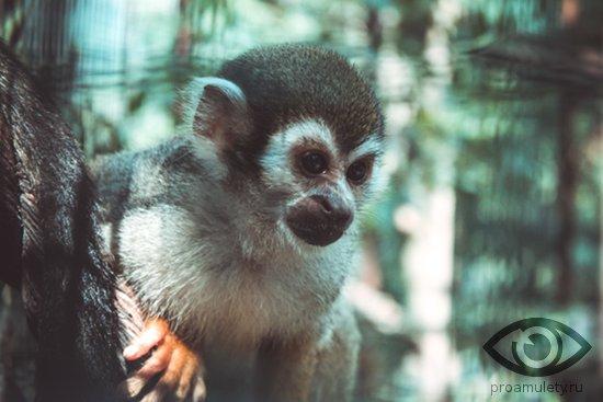 obezjanka-na-dereve-primat