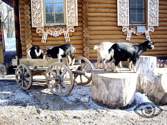 kozy-na-fone-derevenskogo-doma-telega