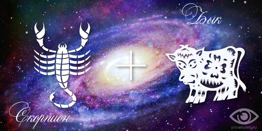 zodiak-skorpion-byk-muzhchina-zhenshhina-harakteristika