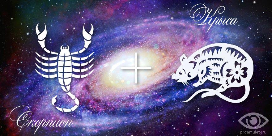 zodiak-skorpion-krysa-muzhchina-zhenshhina-harakteristika