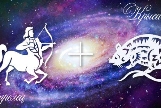 zodiak-strelec-krysa-muzhchina-zhenshhina-harakteristika