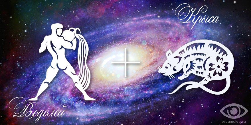 zodiak-vodolej-krysa-muzhchina-zhenshhina-harakteristika