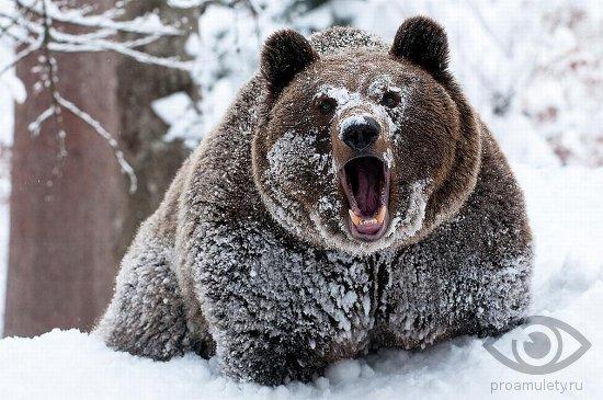 medved-v-zimnem-lesu