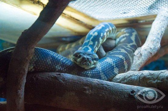 zmeja-akvarium-serpentarij
