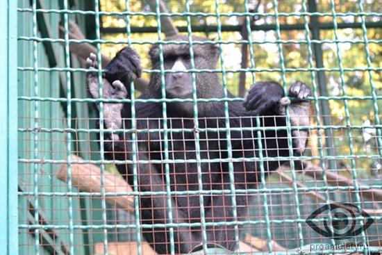 obezjana-v-zooparke-kletka