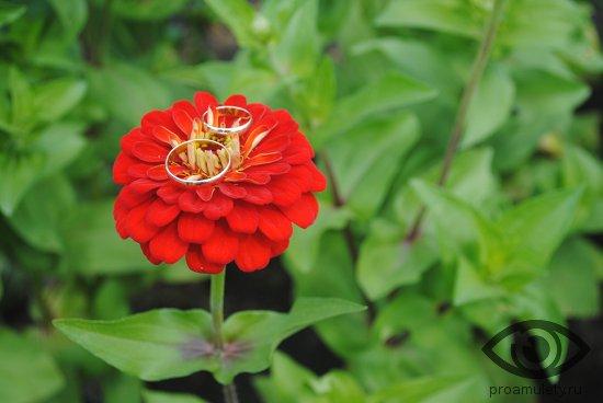obruchalnye-kolca-na-krasnom-cvetke