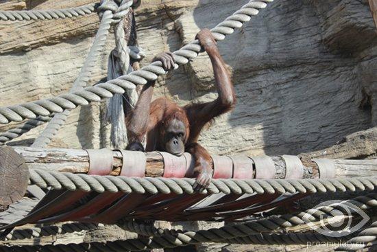 Секс мужчина обезьяна и женщина змея