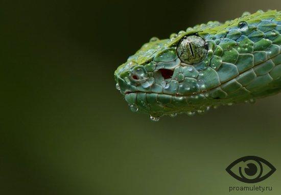golova-zmei-reptilija
