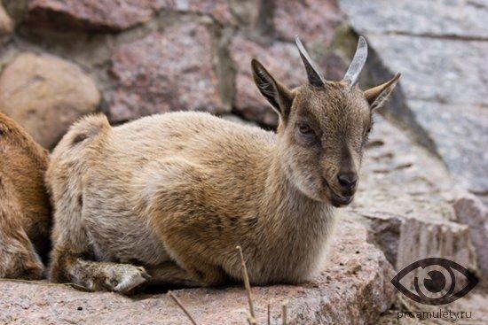 kamerunskaja-koza-skala-kamen
