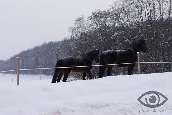 chjornye-koni-na-snegu