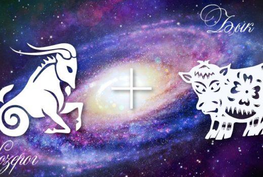 zodiak-kozerog-byk-muzhchina-zhenshhina-harakteristika