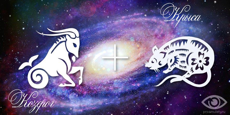 zodiak-kozerog-krysa-muzhchina-zhenshhina-harakteristika