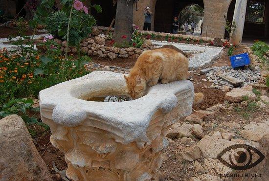 ryzhij-kot-pyot-vodu-iz-fontana